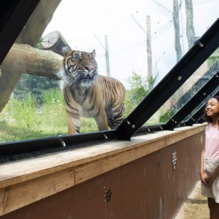 Twycross Zoo Young Conservationist in Chief search